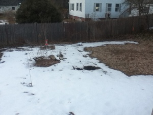 There is a little more dirt visible in the Food It Yourself garden every day. Soon, I'll be germinating seeds out there.