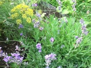 garden, mid season 015