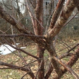 See how those two branches cross? The one in front had to go. Branches that rub can damage each other.