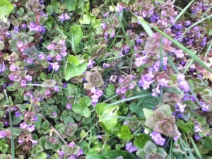 You say weeds I say pollinator positive biodiversity!