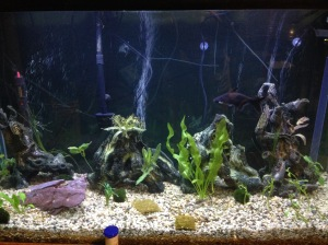 Watching our aquarium is helping me stay calm. Fish are relaxing.